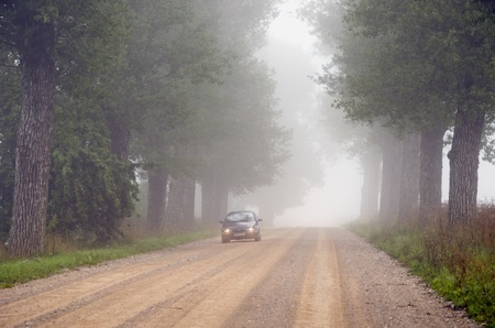 departing: Departing in fog machine in submerged gravel avenue of old trees.