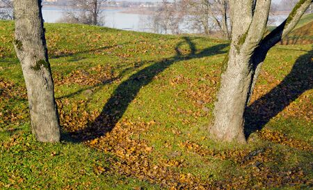 Lime tree trunks and fallen leaves in autumn. Lake landscape background.