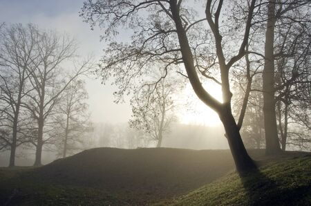sunk: Forest valley fragment. Old lime tree sunken in dense fog.