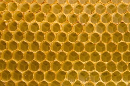 Honeycomb closeup macro background. Bees collected honey container. photo