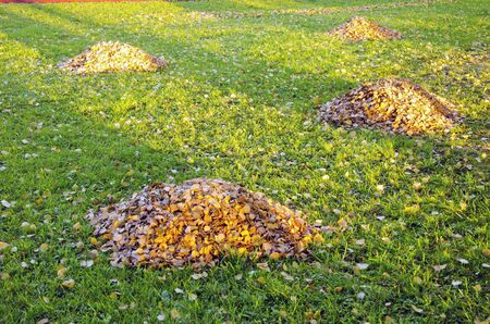 Raken leaves piles in autumn yard. Garden cleaning in autumn. Stock Photo - 11788497