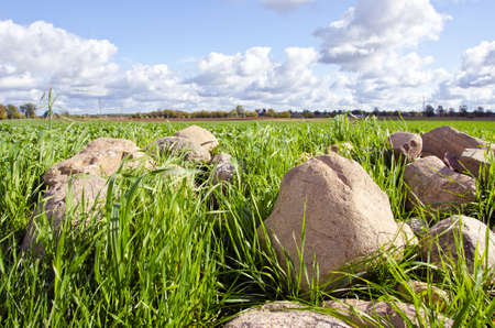 Stones stacked in pile tends to form grass surrounded by agricultural fields.
