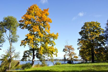 Colorful trees in early autumn at lake. Natural backdrop. Blue sky.  photo
