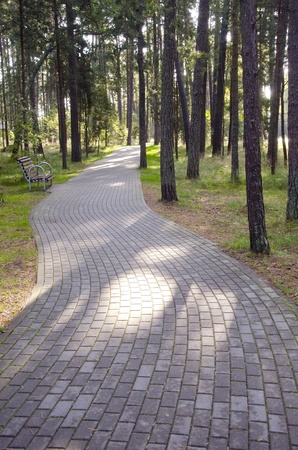 Tiled path curve in park forest fragment. Single bench in resort area. Natural background.