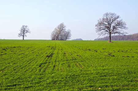 molehill: Agricultural fields sown with green grass, few trees without leaves and lots of molehill in spring   Stock Photo