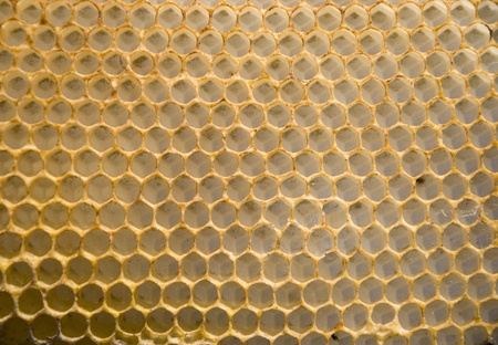 intresting: Intresting texture - a honeycomb mesh background