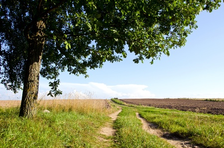 Background of rural gravel road between agricultural fields and oak tree branches   photo