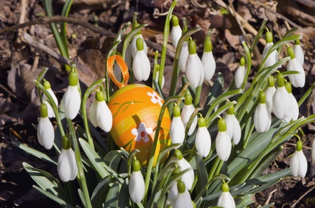 snowflakes blooms white flowers in spring and easter artificial egg   photo