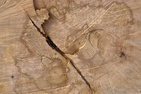 truncated: Background of truncated wood trunk section texture.