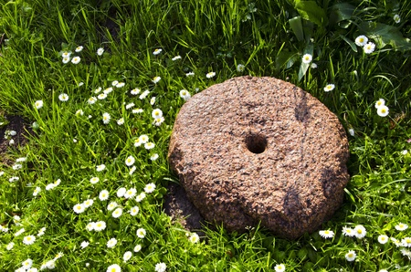 ancient millstone on verdant grass lawn and blooming daisy flowers   photo