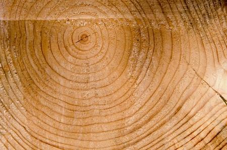 Hintergrund der geschnittenen Baumstamm Nahaufnahme Makro Details. Age of Baum. Holzindustrie. Die Entwaldung mit Kettensäge.