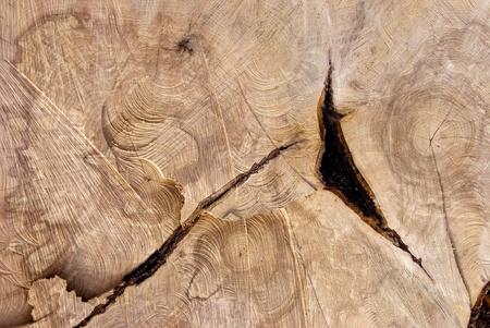 boom kappen: Oude boom snijden textuur. Houten achtergrond.