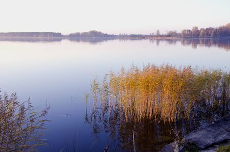 Background of lake landscape in evening  Bulrush grow on coast   photo