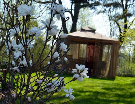 Magnolia white flowers in spring and benches tables and chairs in bower arbour with mosquito protective net