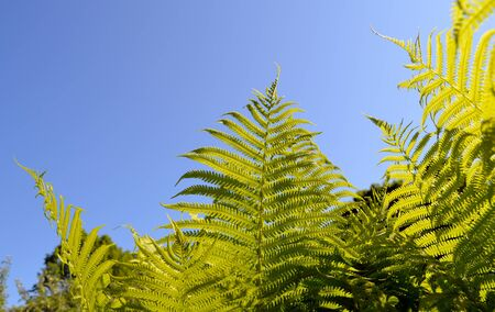 Fern verdant twigs leaves on background of blue sky Stock Photo - 14039461