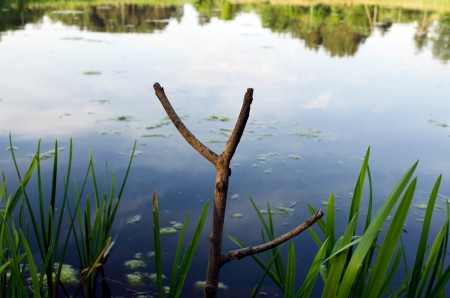 Cut tree branch used as fishing rod stand on lake shore