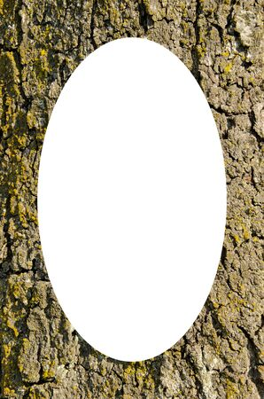 intresting: Old tree trunk with thick bark covered with moss  Intresting background  Isolated white oval place for text photograph image in center of frame