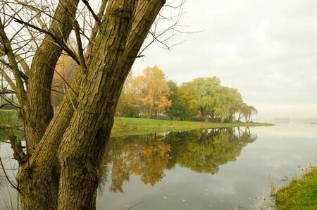 ahogarse: Temprano en la ma�ana lago m�stico r�o y ahogarse fragmento de �rbol en la niebla Foto de archivo