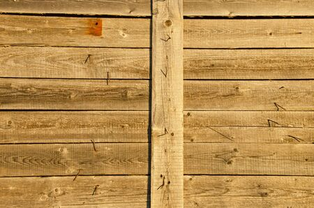 protrude: Background of wooden plank board wall and lot turn nails protrude from it