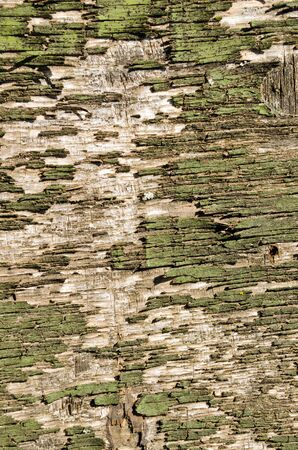 Backdrop of old retro green wooden peeling paint board wall closeup   photo