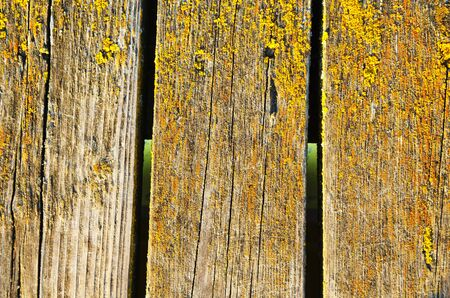 Background of mossy wooden bridge plank board closeup   photo