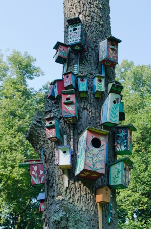 Colorful bird houses nest box hang on old big tree trunk   Stock Photo