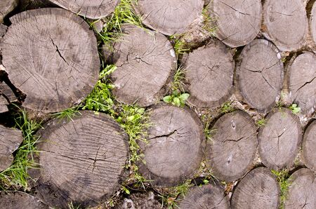 Background of tree stumps sting into the ground   Stock Photo
