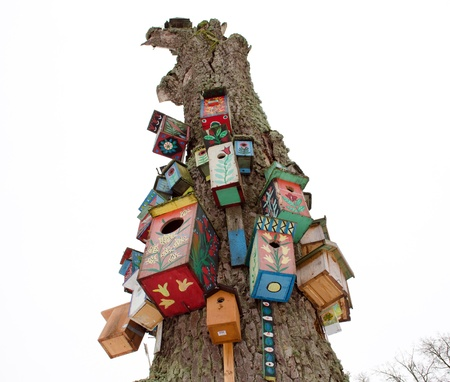 various colorful bird nest boxes houses hang on old dead tree trunk. art for birds.