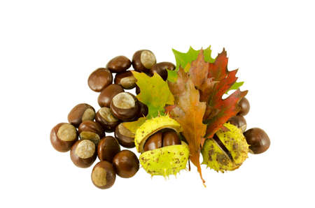 sear: chestnuts autumn composition and sear leaves isolated on white background