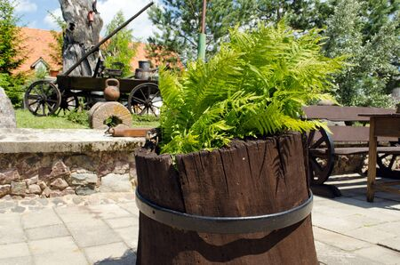 fern grow in rural flower pot and other retro decorations tools in garden park.
