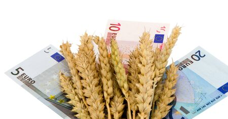 wheat ripe ears on euro cash boanknotes  isolated on white background autumn harvest business industry