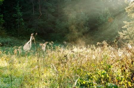 evaporarse: telara�as prado roc�o ver en plantas prado y la luz solar vapor se evapora. Foto de archivo
