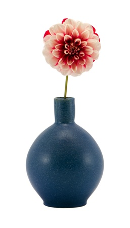 pink red white dahlia flower bloom in retro blue vase isolated on white background  photo