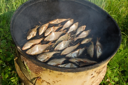 closeup of ecologic salted fish smoke in smokehouse smoke house made of old rusty barrel