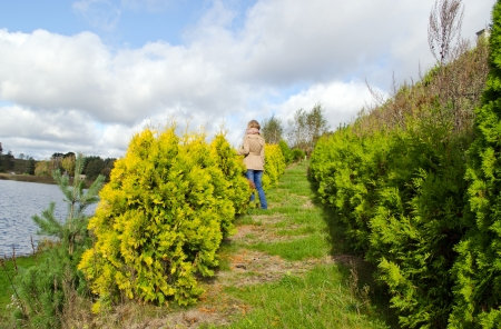 blond woman stand between thuja bush plant alley admire lake landscape   photo