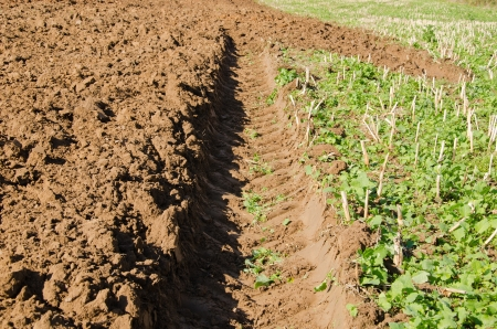 tractor wheel mark trail on soil of agricultural plow field Stock Photo - 18652440