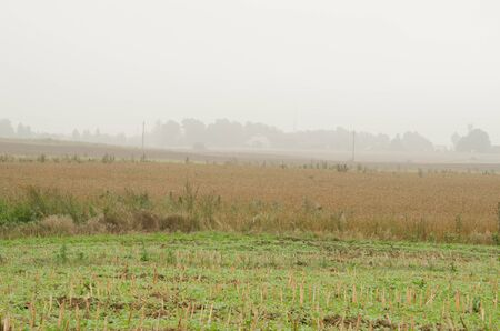 landscape of rural agriculture fields and morning fog.  photo