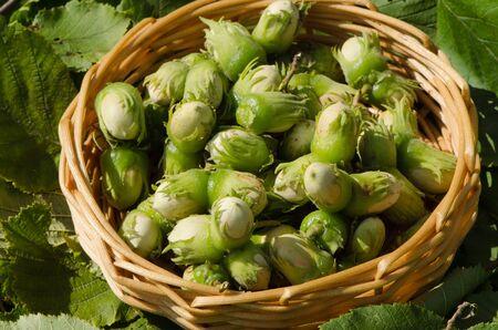 hazel nuts in wicker wooden dish on leaves background.