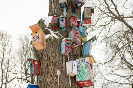 decorative colorful painted birdhouse nesting boxes hang on large old tree trunk covered with snow in winter.