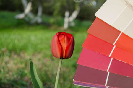 compared: red tulip bud compared with color card palette outdoor