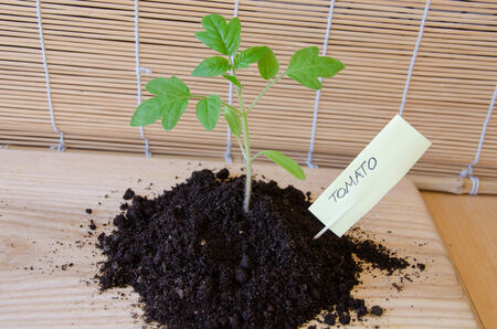 citation: tomato seedling grow in small mound of black earth, paper card with the citation