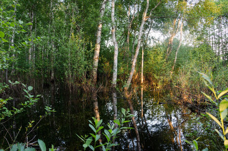Fragment of flooded forest trees and evening sunset reflections on water in spring.