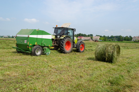 tractor bailer collect hay in field. Agricultural machine making hay bales. Seasonal rural works.  photo