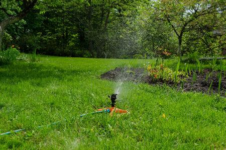 sprinkling: sprinkling irrigation on the grass garden