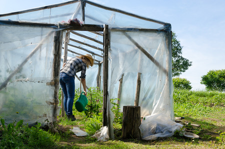 Gardener woman with watering-can water plants in handmade greenhouse conservatory.
