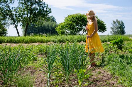 Barefoot gardener woman girl in yellow dress and hat work in garden with hoe between garlic and pea plant.  Zdjęcie Seryjne