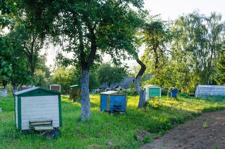 sun lit: colorful row of hives between apple tree evening sun lit rural garden