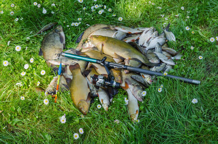 successfull: successfull fish catch pile on grass with rod and float  Stock Photo