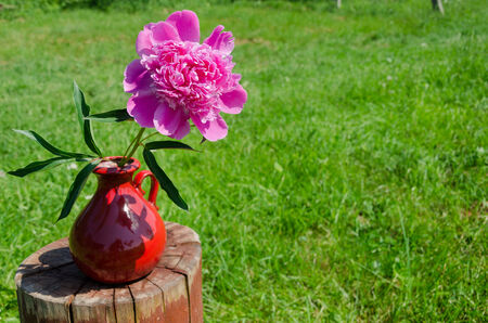 big red peony in earthen handmade pitcher on the stump grass background