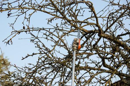 pruning fruit tree, cutting branches at spring, seasonal garden work  Zdjęcie Seryjne